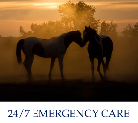 24/7 Emergency Care | horses in field