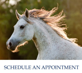 Schedule an Appointment | grey horse