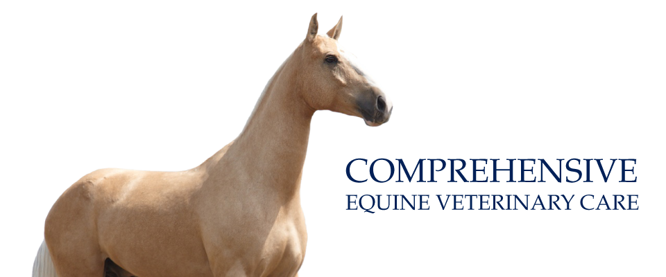 Comprehensive Equine Veterinary Care | Palomino horse